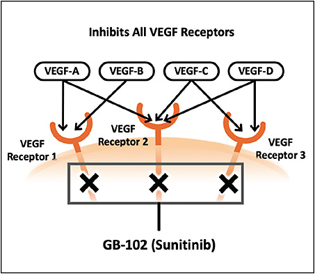 Figure 2. Sunitinib malate is a potent pan-VEGF-receptor inhibitor and neuroprotectant.